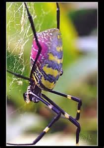 Beautiful Garden Spider