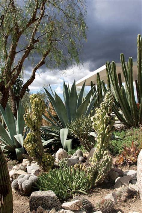 cactus los angeles a waterwise cactus garden garden design