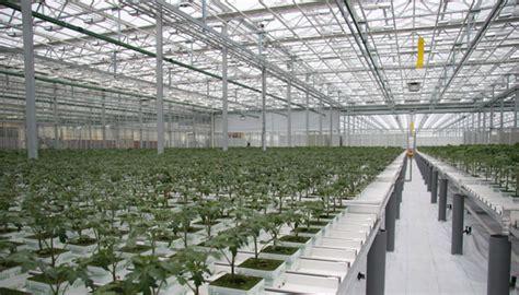 melbourne airport   home   cannabis farm