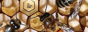 Ouessant Ma Passion : ouessant notre passion le miel d 39 ouessant fait le buzz ~ Nature-et-papiers.com Idées de Décoration