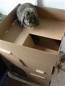 Maison Pour Lapin : fabriquer une cabane en carton pour lapin ~ Premium-room.com Idées de Décoration