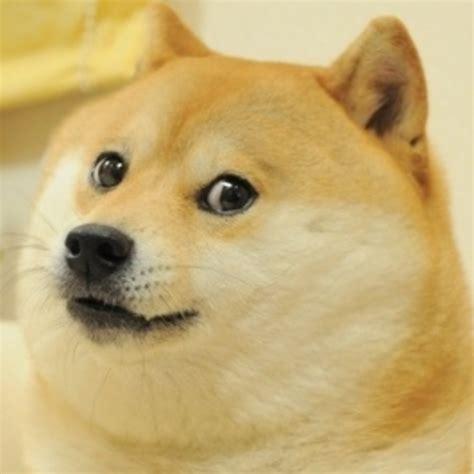 Know Your Meme Doge - the original doge doge know your meme
