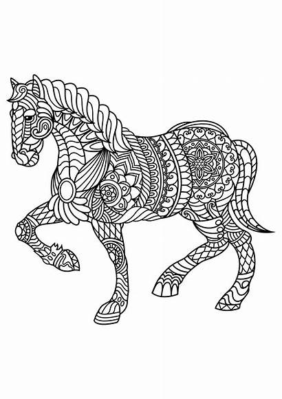 Horse Coloring Horses Patterns Pages Complex Adult