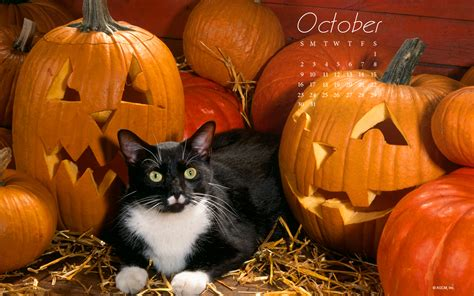 Wallpaper Cat And Pumpkin by Desktop Backgrounds Archives Blue Mountain
