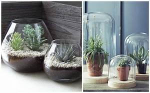 Serre Pour Plante : plantes d 39 int rieur d corez avec des plantes vertes ~ Premium-room.com Idées de Décoration