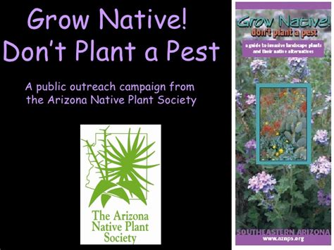 arizona plant society grow native
