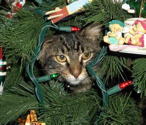 cat christmas tree water cats helping decorate trees bored panda cat proof 5842