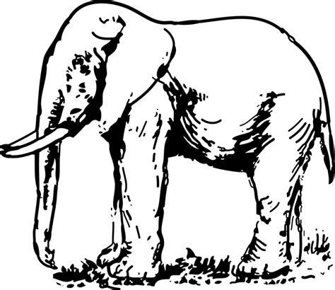 elephant clipart black and white elephant free stock photo illustration of an elephant