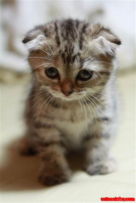 You've Cat To Be Kitten Me Right Meow  Cute Cats Hq