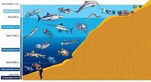 Ocean Zones - Lesson