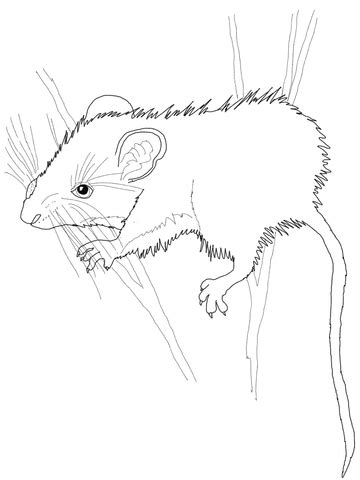 deer mouse coloring page  printable coloring pages