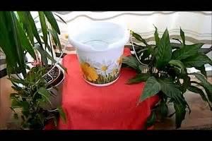 Bewässerungssystem Für Zimmerpflanzen : bew sserungssystem f r das gew chshaus selber bauen ~ Markanthonyermac.com Haus und Dekorationen
