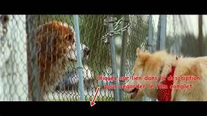 Q Film Complet Youtube : mes vies de chien film 39 complet 39 en 39 fran ais youtube ~ Medecine-chirurgie-esthetiques.com Avis de Voitures