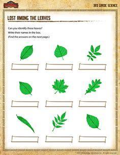 leaf science  kids images science  kids
