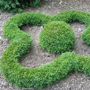 Langsam Wachsende Hecke : buxus green gem ~ Michelbontemps.com Haus und Dekorationen