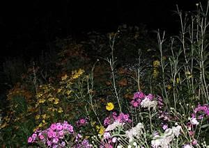 Trauer Blumen Bilder : trauer bilder 10 blumen in der nacht beileidsbrief schreiben texte gedichte ~ Frokenaadalensverden.com Haus und Dekorationen