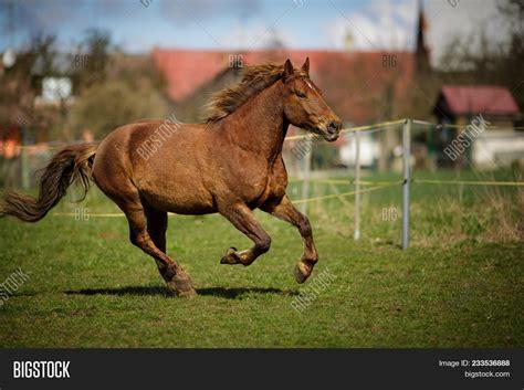 fast horse running