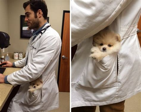 worlds sexiest vet evan antin hottest animal doctor