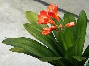 Plante Tropicale D Intérieur : plante verte tropicale d int rieur fleuriste bulldo ~ Melissatoandfro.com Idées de Décoration