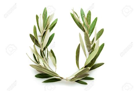 27380312 The Olive Wreath Also Known As Kotinos Was The