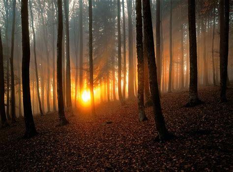 los  bosques mas bonitos del mundo  hay dos espanoles