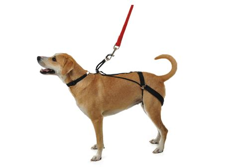 horgan harness   pull dog harness