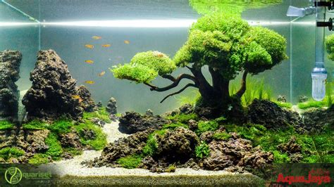 pin  stephanus mardianto  aquascape pinterest