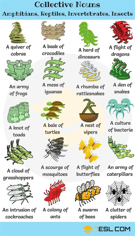 collective nouns  animals  english