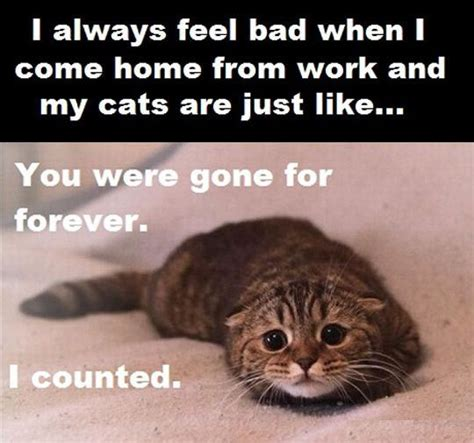 Sad Cat Counted To Forever While Waiting For You