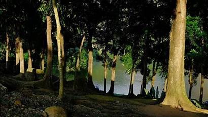 Summer Cool Wallpapers Backgrounds Forest Arena Landscape