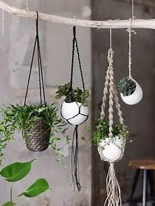 Suspension Plante Interieur : 5 id es d co pour adopter des plantes d 39 int rieur d cor sens ~ Preciouscoupons.com Idées de Décoration