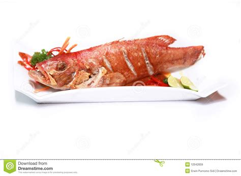 grouper seafood royalty photograph dreamstime