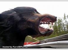 Lustige Tierbilder GB Pinnwand Facebook BilderGB Bilder