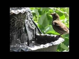 Oiseaux Decoration Exterieur : fontaine murale pour les oiseaux youtube ~ Melissatoandfro.com Idées de Décoration