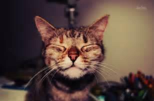 happy cat is coming pawmetto lifeline