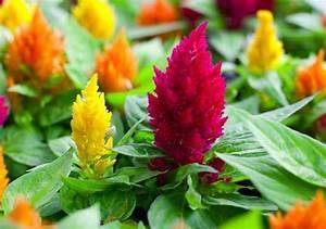 22 Flowers For Full Sun And Heat Tolerant Flowers