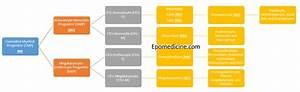 Concept Of Acute Myeloid Leukemia  Aml  Fab Classification