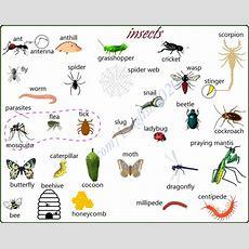 Vocabulary Insects  English Language, Esl, Efl, Learn English, Vocabulary And Grammar