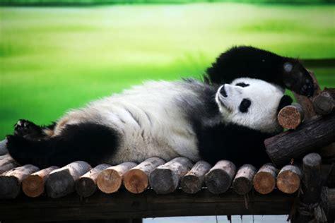 imagenes de animales adorables  tiernos descansando