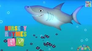 Animals In The Ocean  Nursery Rhymes Tv  Toddler
