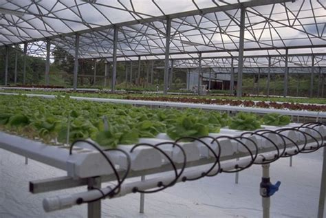 Garden Growers Supply by Commercial Hydroponic Systems