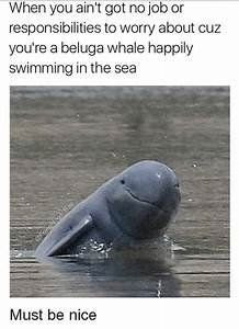 25+ Best Memes About Beluga | Beluga Memes