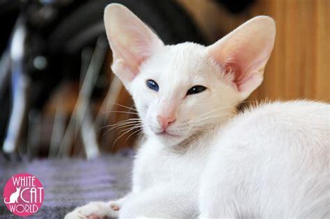 White Cat World