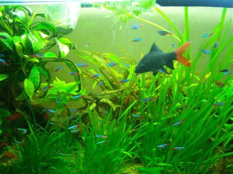 nombre de poisson dans un aquarium cohabitation crevettes poissons