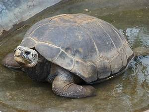 Galapagos Tortoise Lafayette In Official Website