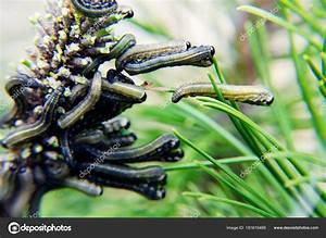 Schädlinge Im Garten : garten sch dlinge fressen die bl tter bek mpfung von ~ A.2002-acura-tl-radio.info Haus und Dekorationen