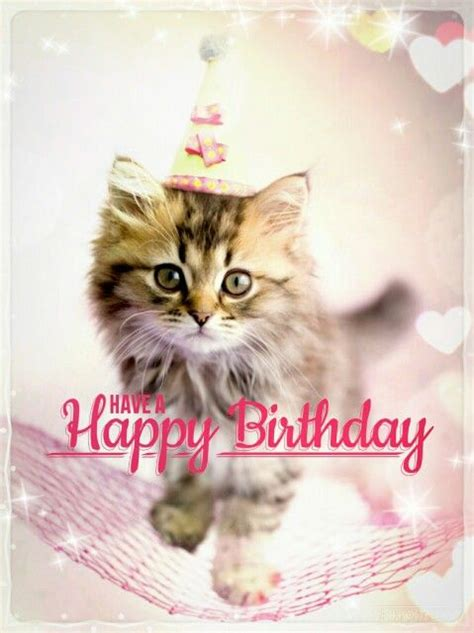 Happy Birthday Meme Cat - best happy birthday cat meme
