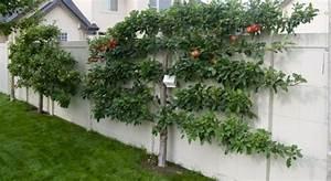 Spalierobst Anbauen Herrliche Idee Fr Den Kleinen Garten