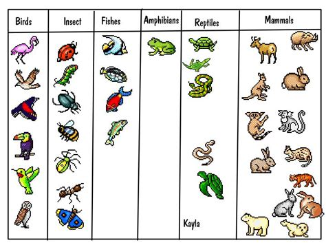basic animal classification for print for