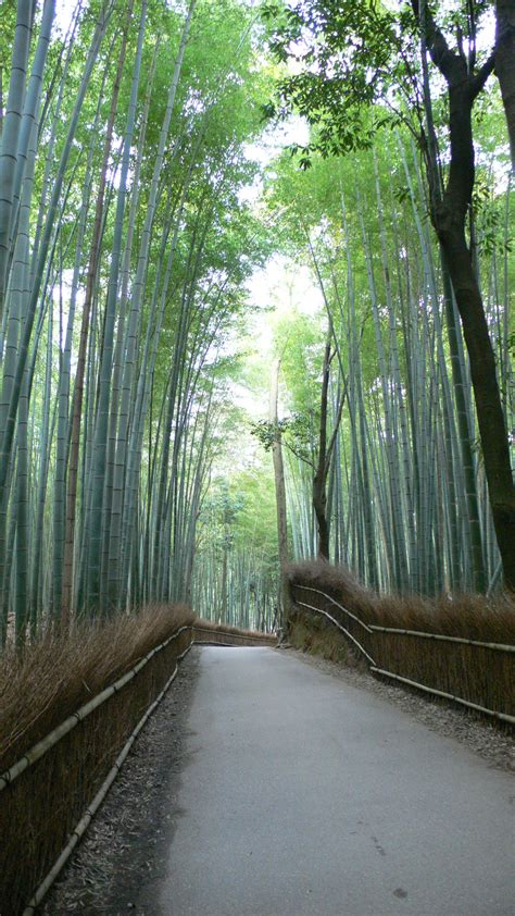 bamboo forest wallpapers high quality
